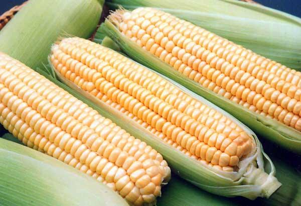 Acheter Кукуруза