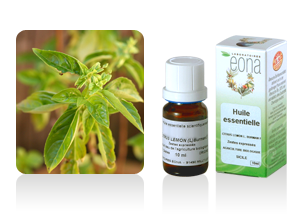 Acheter Huile essentielle de Basilic tropical Bio