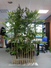Les arbres semi-naturel / artificiel