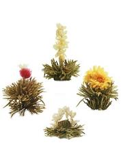 8 fleurs de thé blanc Abloom bio