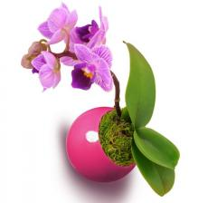 Plante magnétique Orchidée