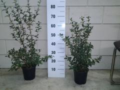 Trees;plants;arbres;vivaces;rosiers;bulbes