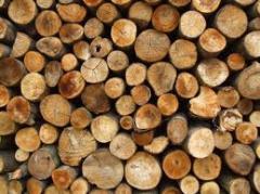 Qualité et de la production de bois de chauffage de hêtre