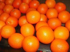 Orange (Naveline, Salustiana, Sanguinelli, Navel,