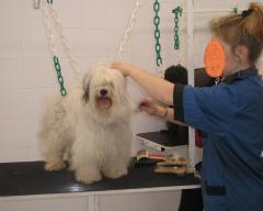 Grumer services (hairdresser for animals)