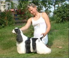 Cultivation of dogs of elite breeds