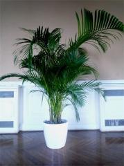 Location de plantes vertes